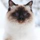 Аватар пользователя Любовь Орлова