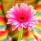 Аватар пользователя karmasovat98